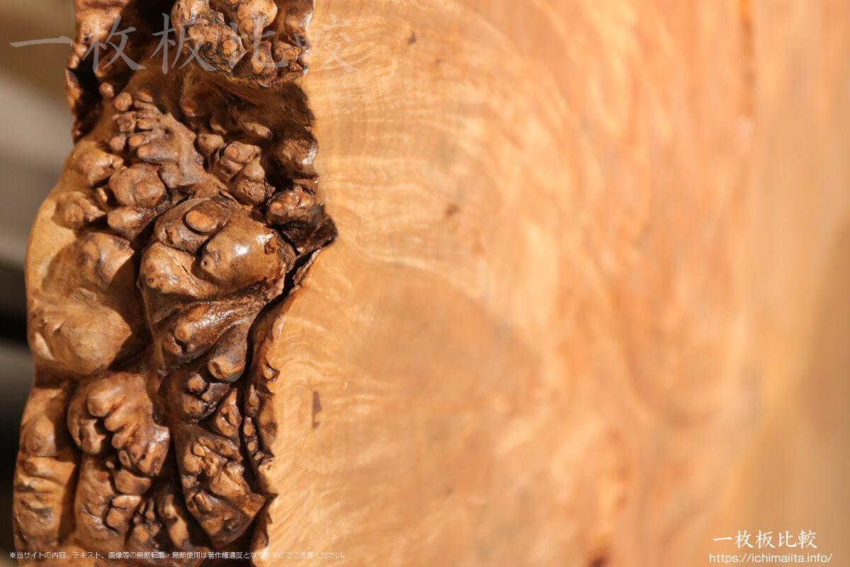 コブ杢が美しいビッグリーフメープル