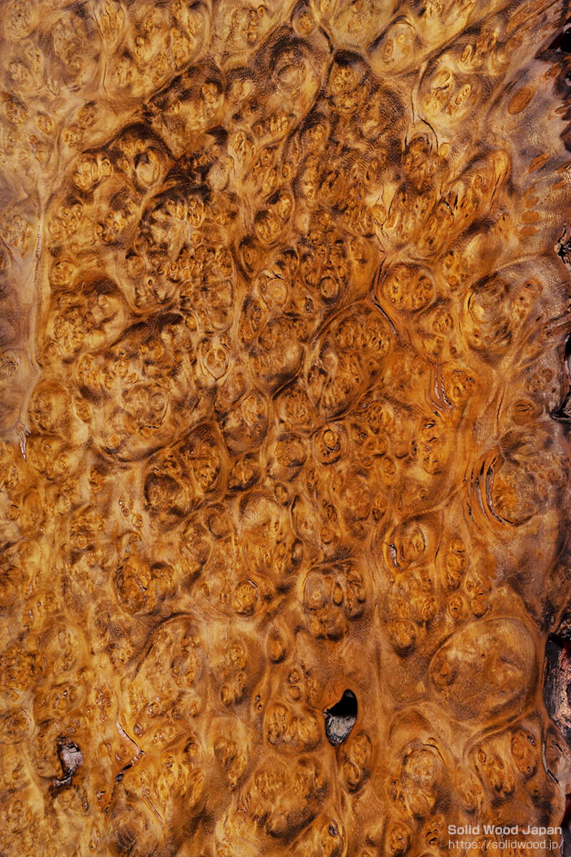 小笠原桑の瘤から得られた葡萄杢目(ぶどうもくめ)