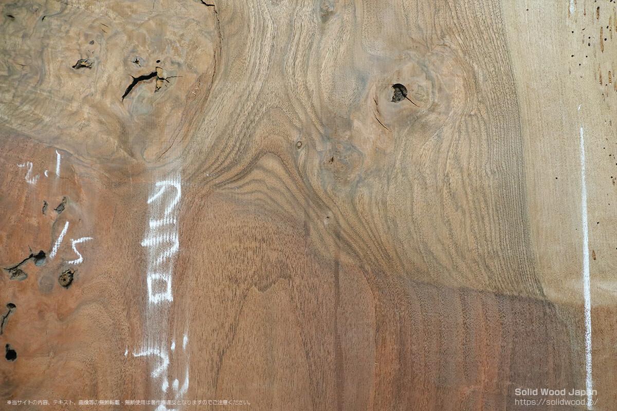ハインズウォールナットの株にヨーロピアンウォールナットを接木された部分