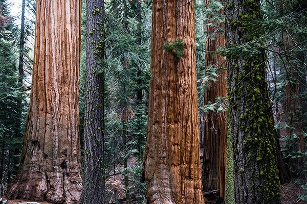 伐採から原木について