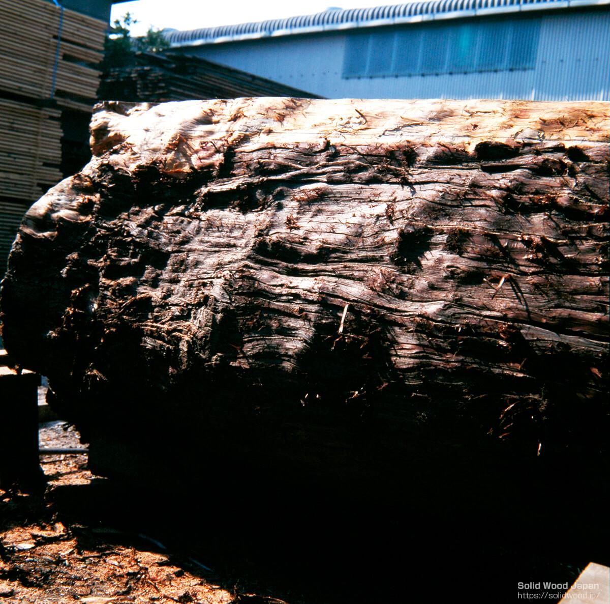 樹幹自体に瘤(こぶ)目が発生する原木