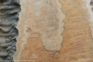 ケヤキタクリモク(欅タクリ杢)の一枚板