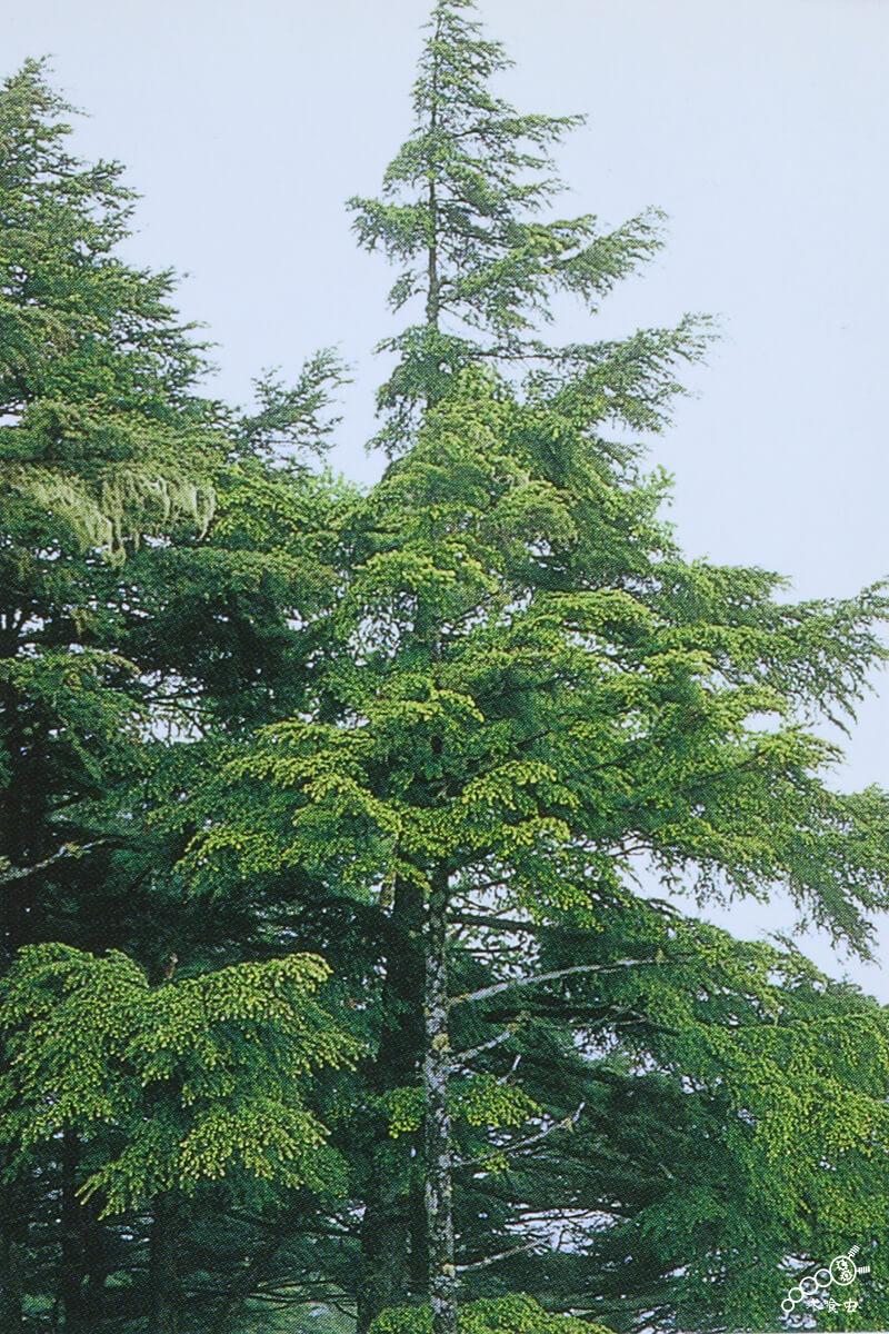 植林・伐採を主に行なう