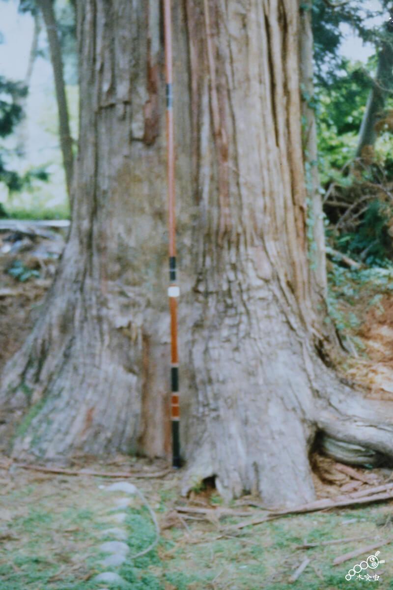 釣具の鮎竿を使った原木サイズの測り方