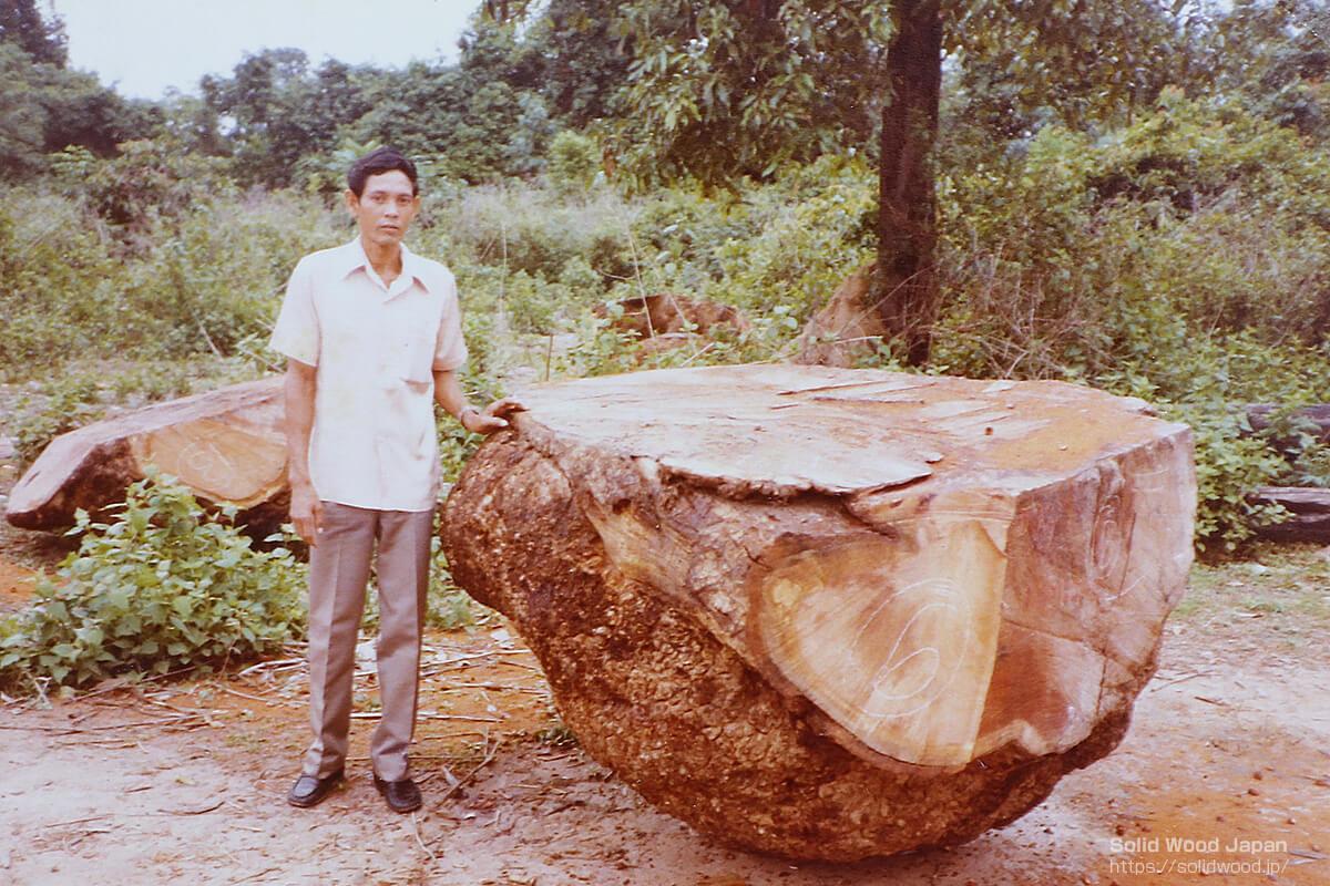 幹瘤を落として土場に置かれた花梨(カリン)の瘤