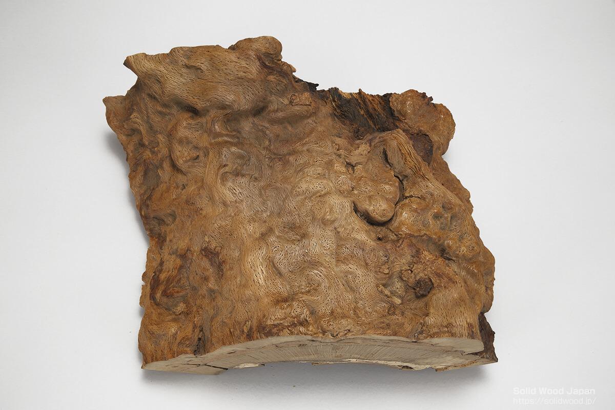 樫(カシ)の丸太の肌切り取り材