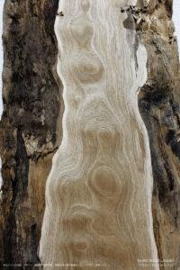クリタマモク(栗玉杢)の一枚板