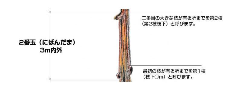 2番玉(にばんだま)