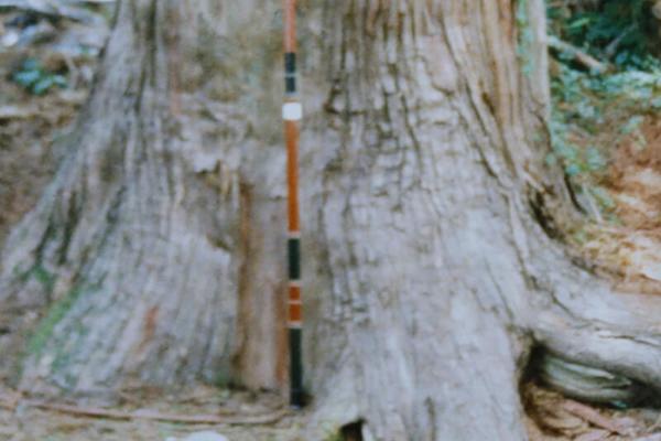 原木に最適な径寸について