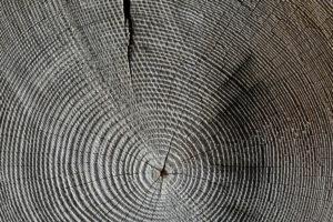 木目(もくめ・きめ)と杢目(もくめ)の違いについて