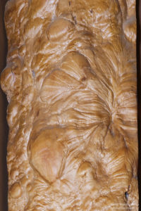 栃(トチ)老木の樹肌(上段)