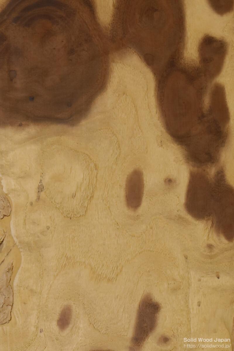 桑(くわ)の玉杢目の木表【拡大写真】