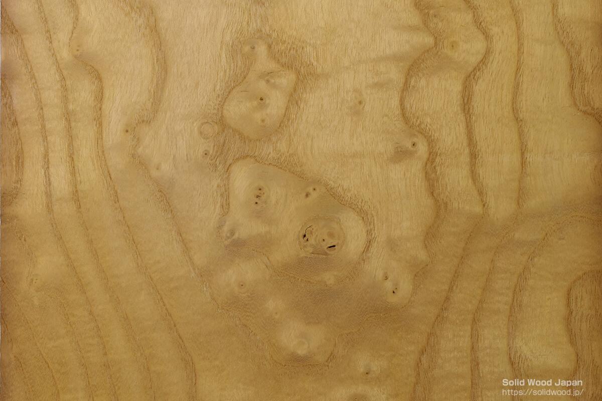 里山を代表する桑(くわ)材