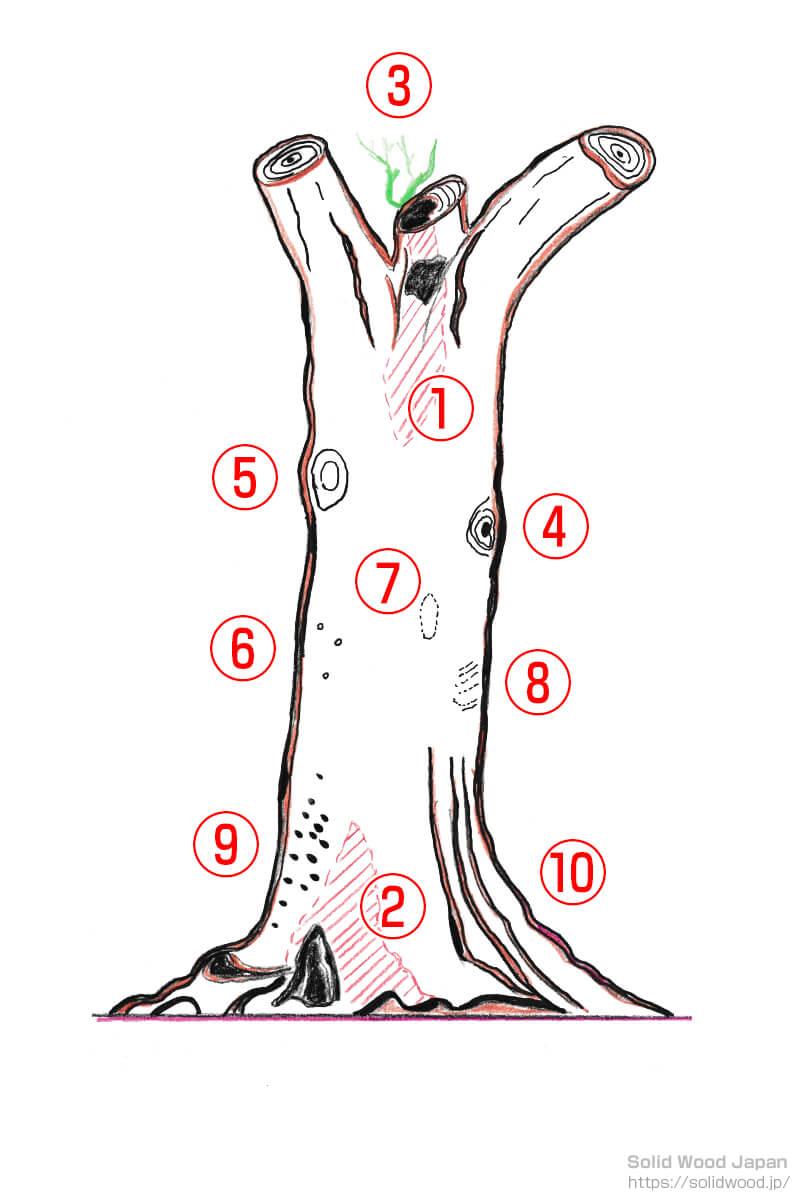 立木の欠点に関する図解