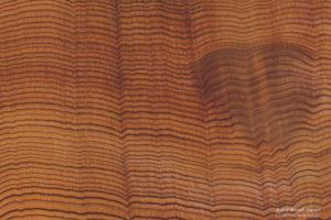 樹齢の高い杉原木、丸太小口の断面写真