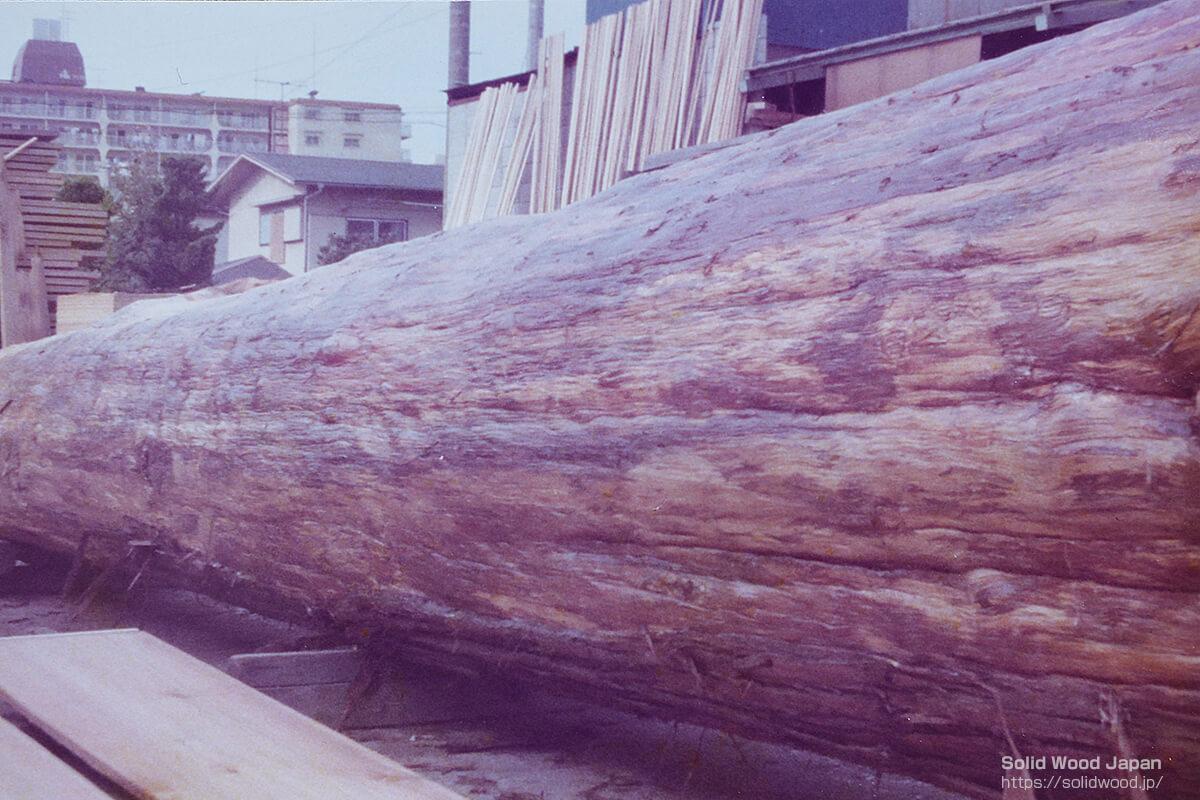 樹齢400年の霧島杉の長さタテの絞り肌