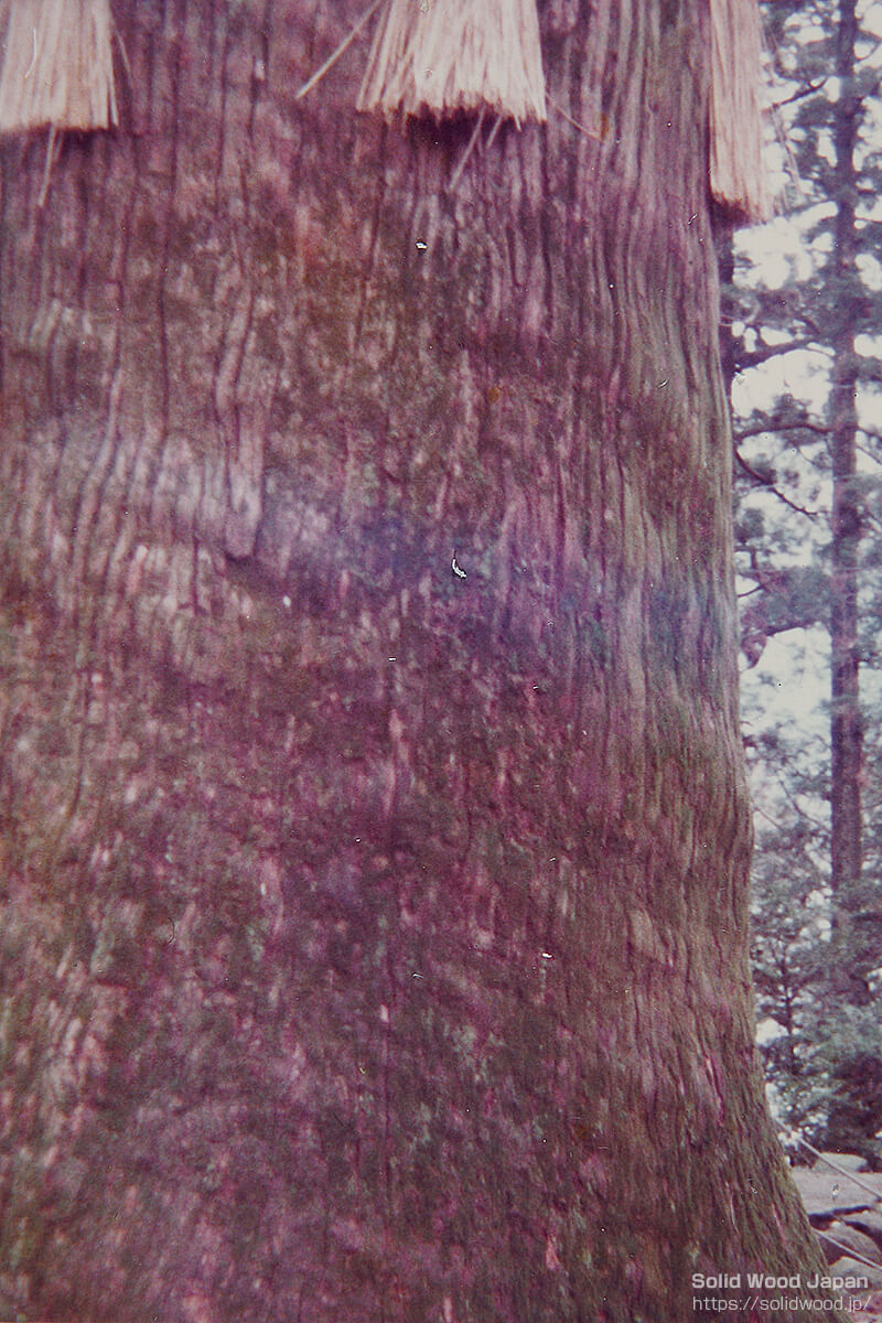 杉の横の絞り