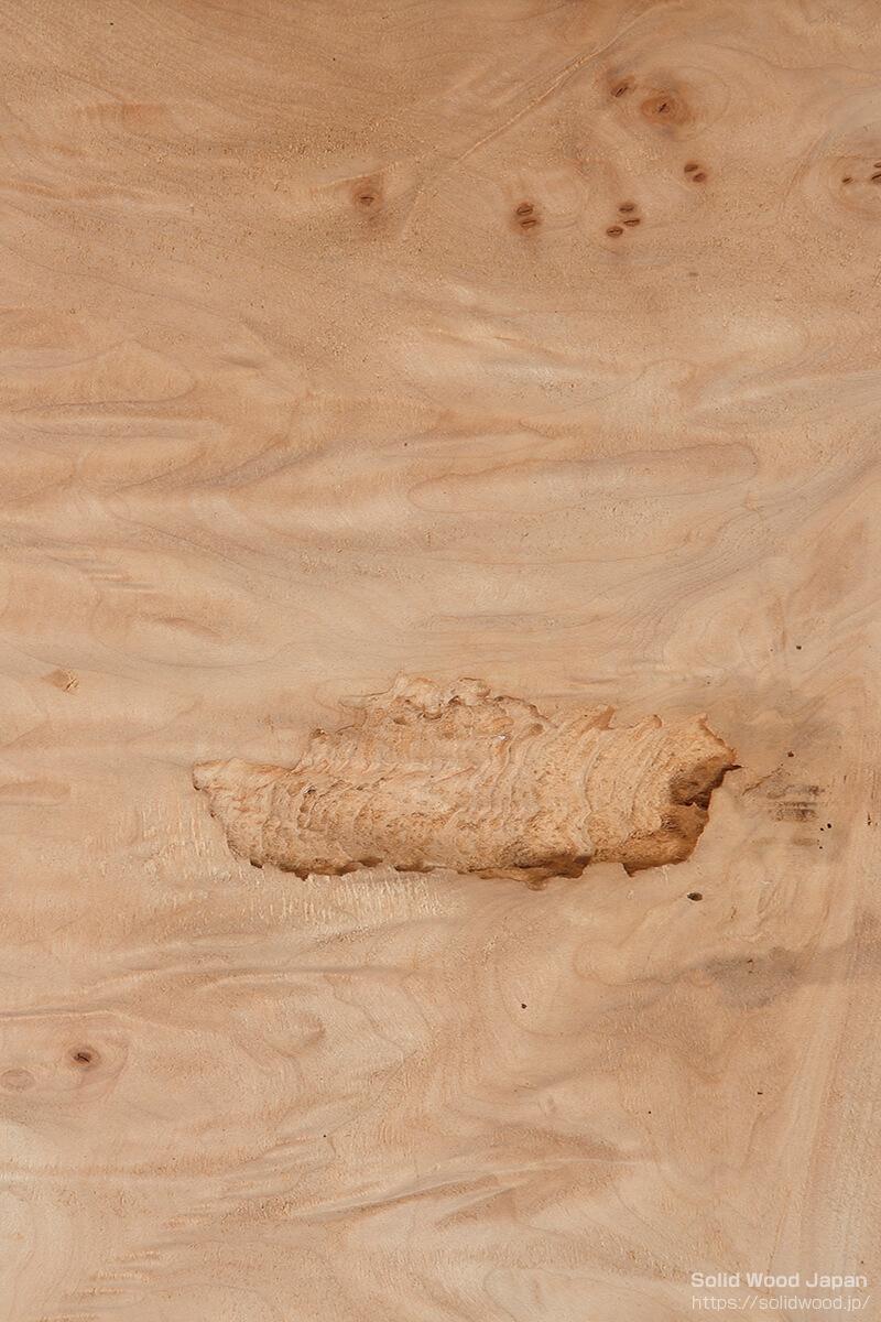葉節・虫穴・バミ